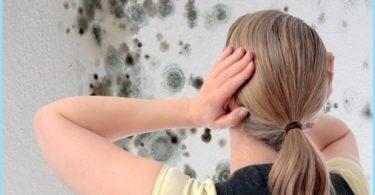 Wie wird man im Bad von Schimmel zu befreien: ein Mittel zur Bekämpfung der