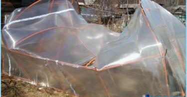 Gewächshaus aus Polycarbonat mit ihren Händen