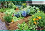 Gravel Garten mit seinen eigenen Händen - wie Sie Kies im Garten nutzen können