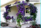 Koniferen für Gärten: Garten-Entwurf mit Nadelbäumen