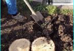 Arten Fichte: Die besten Ziersorten für die im Garten wachsen