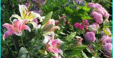 Lilien in der Landschaftsgestaltung: Optionen Pflanzung, Auswahl der Sorten