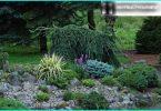 Juniper: Pflanz- und Instandhaltungsvorschriften, die Wahl der Sorten
