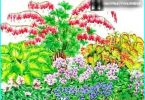 Anbau, Pflanzung und Pflege von Dicentra (gebrochenes Herz)