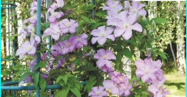 Wie die Einachser für den Garten zu wählen: eine Maschine besser?