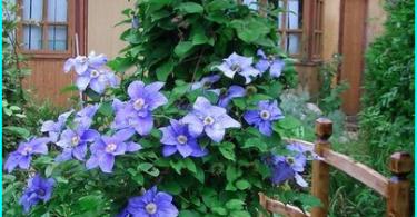 Wie man einen Gartenhäcksler zu wählen - was ist besser und warum?