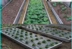 Motorpumpe für die Bewässerung des Gartens: wie man eine gute Maschine zu wählen?
