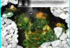 Zuchtfische in künstlichen Teichen - die Eigenschaften und Nuancen
