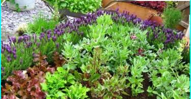 Wie man einen Garten in einer Flasche zu machen: ein Master-Klasse auf dem Gerät florariuma